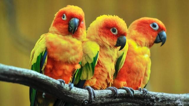 Nagyon cuki papagájok :)