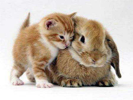 A szuper cuki kis cica melett egy nyuszi van.